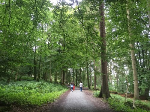 nature jungle trail