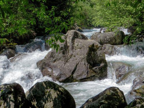 nature water wild