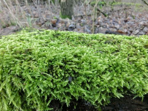 nature forest moss