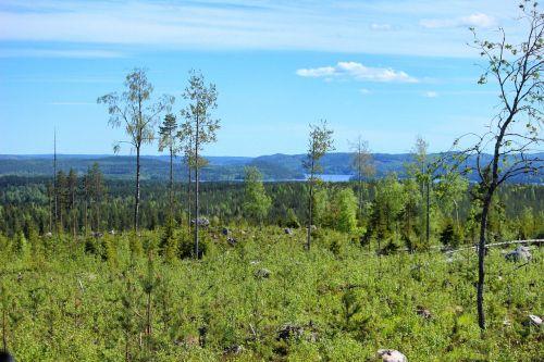 nature finnish finnish landscape