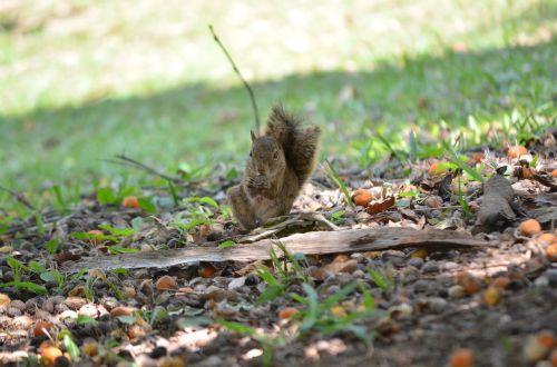 nature squirrel funny