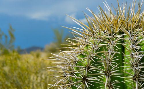 nature desert plant