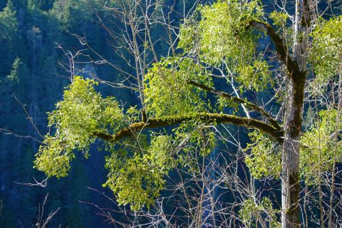 nature tree spring