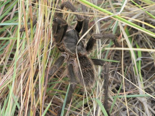 nature spider animal