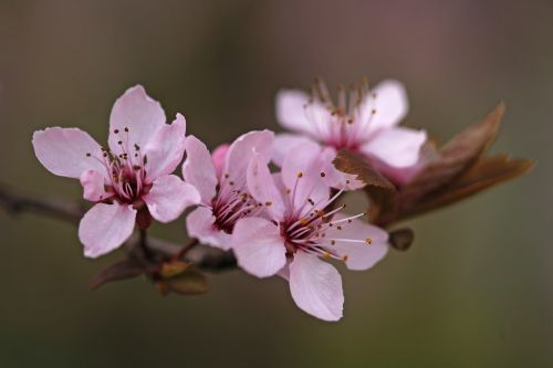 nature blossom spring