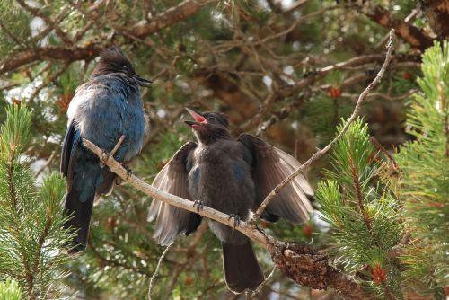 nature bird young