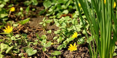 nature flora ground