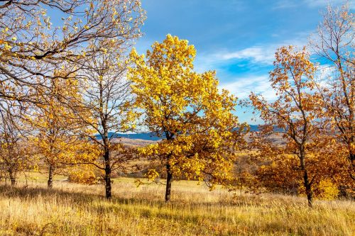nature trees landscape