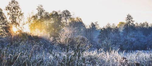 nature winter morning