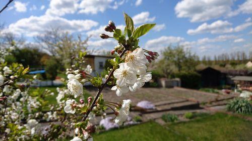 allotment garden nature