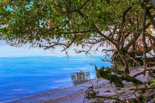 nature landscape beach