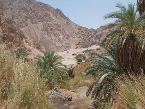 nature oasis kini egypt