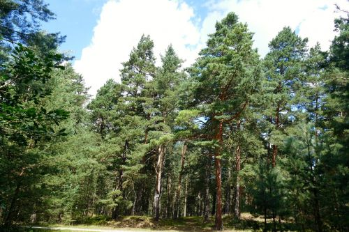nature forest trees