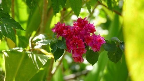 nature plant flowers