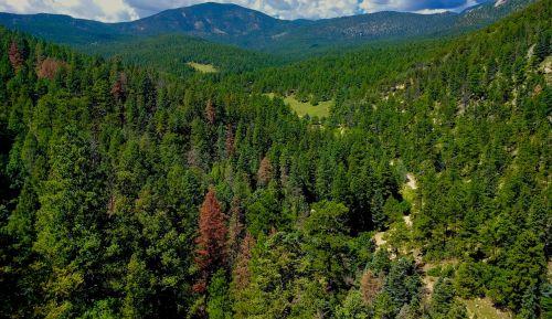 gamta,slėnis,medžiai,kraštovaizdis,lauke,vasara,gamtos kraštovaizdis,vaizdingas,natūralus,debesis,kaimas,kalnas,miškas,nuotykis,žalias,peizažas,medis,augalas,saulėtas