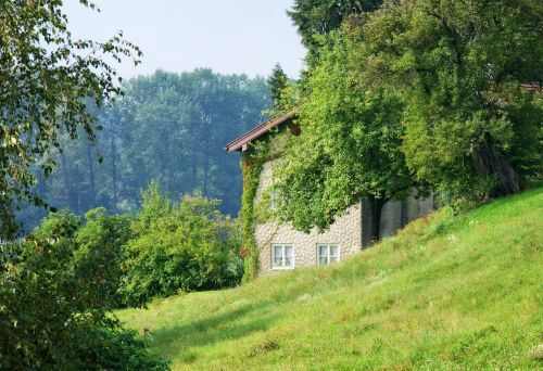 nature home green