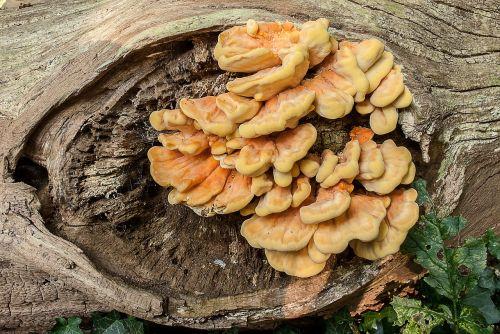 nature fungi mushrooms