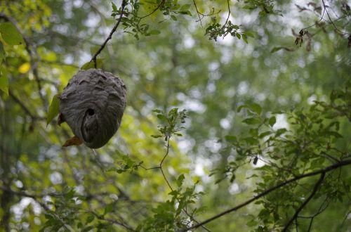nature wasp nest nest