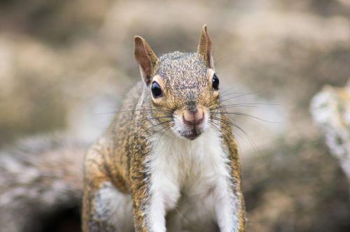 nature squirrel animal