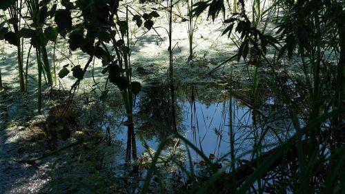 nature water trueb