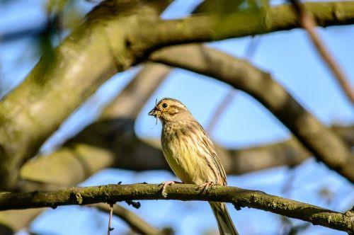 nature bird fink