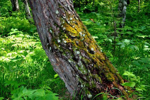 nature tree greens