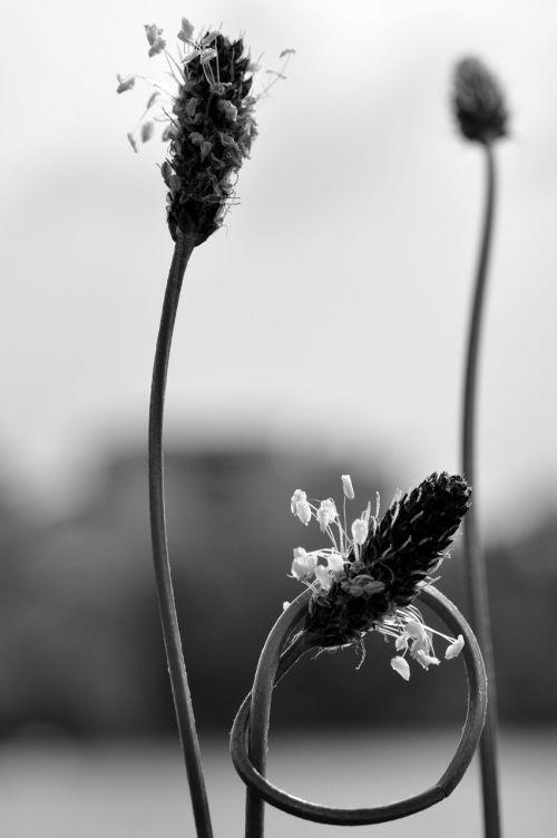 nature knot plant