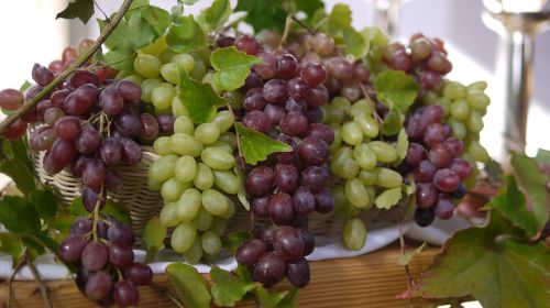 nature autumn vines