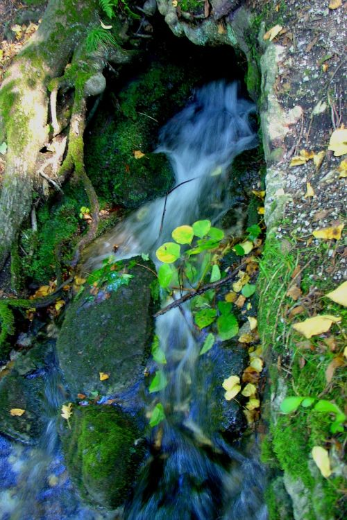nature water bach