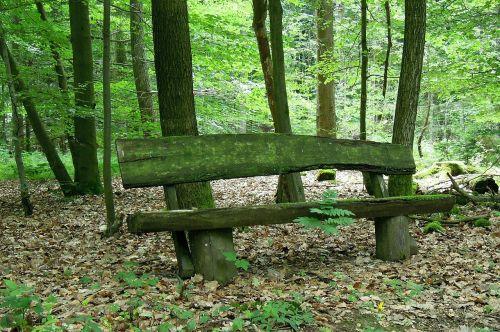gamta,out,stendas,medinis stendas,banko sėdynė,miškas,lapai,medžiai