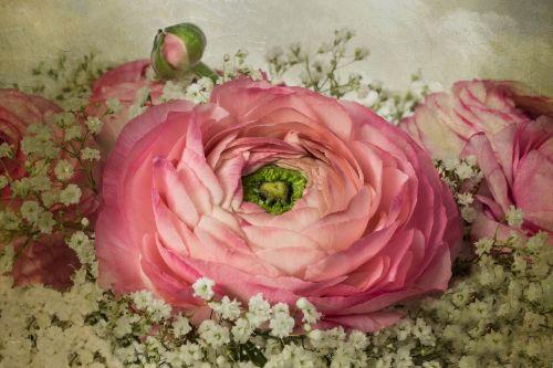 nature flowers bouquet