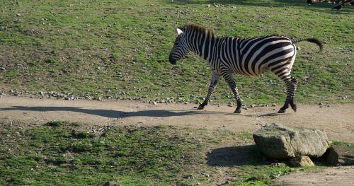 nature animals zoo