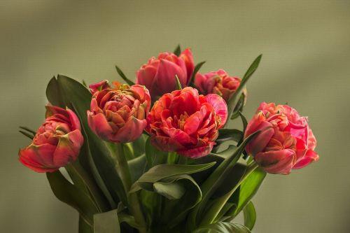 nature flowers tulip bouquet