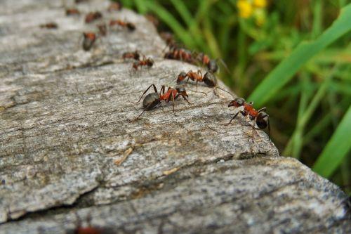 nature ants wood