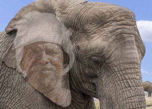nature elephant animal