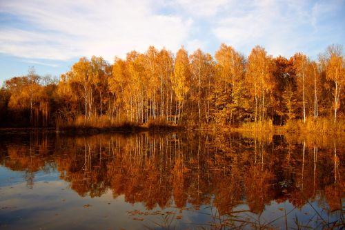 nature tree autumn autumn mood