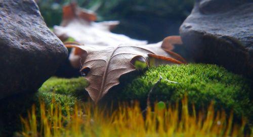 nature plants dry