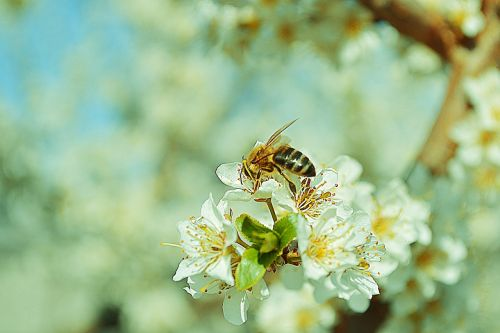 nature flowers wasp