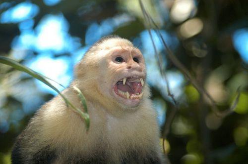 nature monkey wild