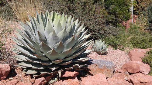 nature cactus sedona