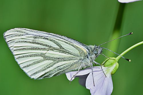 nature butterfly macro