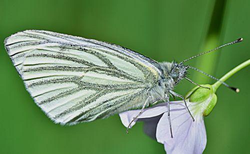 gamta,drugelis,sodas,sparnai,vabzdys,grožis,monarchas,pavasaris,skrydis,Grynumas,fauna,makro,sparno zoologija,metodas,spalva,vasara,gėlė,oranžinė,gėlės,raudona,augalai,violetinė,kraštovaizdis,lazda,skraidantys vabzdžiai,libelulido,libellulidae,skraidantis vabzdys,mėlyna lazdele,filialas,vanduo,upė,Tyras vanduo,natūralus vanduo,kristalinis,skaidrus vanduo,šaltinis,burbuliukai,užtvankos,aiškumas,upelis,skaidrus vanduo,reaktyvinis,gėlas vanduo,kristalinis vanduo,jūra,srautas