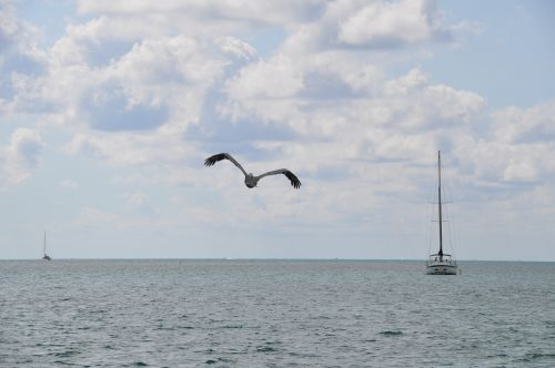 nature pelican boat