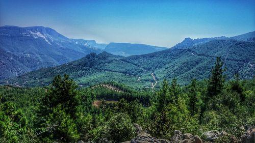 nature landscape forest