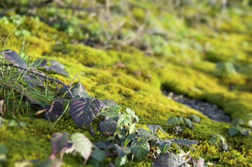 nature moss plant