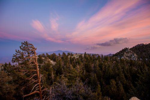 gamta,kraštovaizdis,saulėlydis,dangus,natūralus,medis,lauke,miškas,saulės šviesa,žalias,vaizdingas,spalvinga,scena,aplinka,peizažas,debesis
