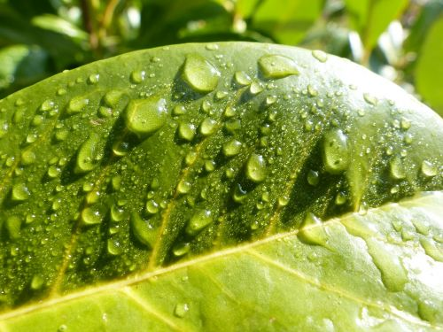 nature green raindrop