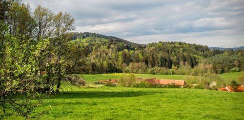 nature landscape meadow