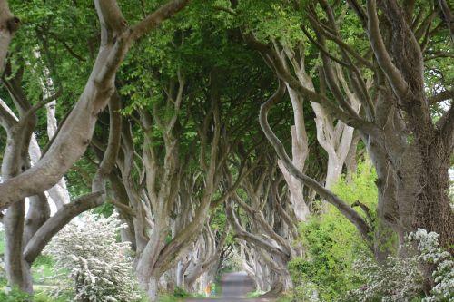 nature ireland beech