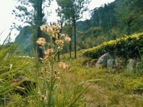 nature flower sri lanka